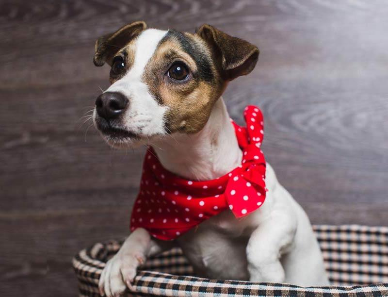 Dog Bandanas and Bow Ties