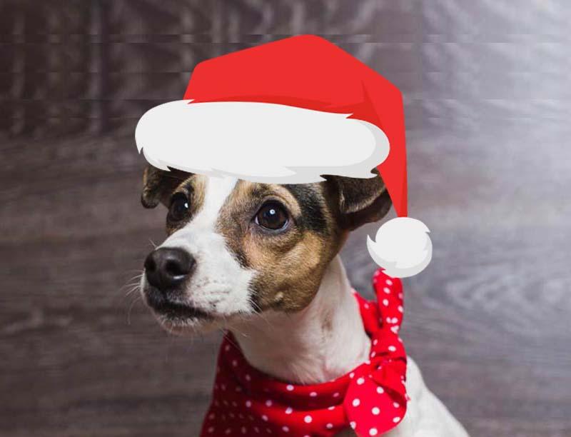 DogBandanas-Christmas